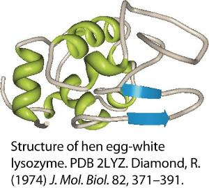 Lysozyme (Muramidase), from hen egg white, Ultra Pure Grade