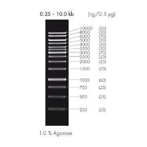 DNA ladder, 1 kb, peqGOLD | VWR