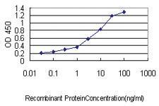 Anti-WFDC2 Mouse Monoclonal Antibody